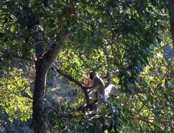 Aapjes in de bomen