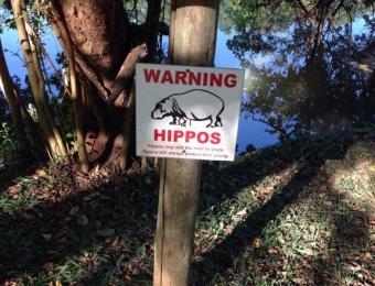 Warning hippos