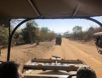 Safari-in-Chobe-National-Park