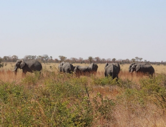 Elephants-on-the-road-to-Kasane