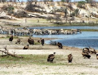 Dieren komen naar de Boteti rivier