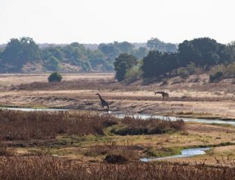 Afrikaanse savanne met de Letaba rivier