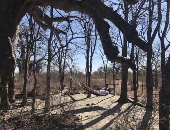 Planet-Baobab-Gweta