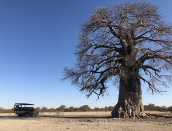 Grote baobab bomen komen hier voor