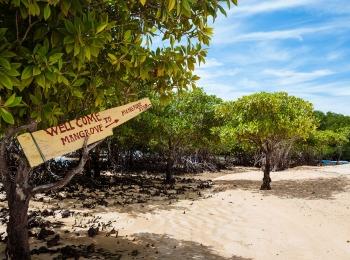 Mangrove bos op Nusa Lembongan
