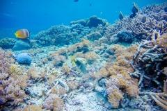 Koraal bij Crystal Bay, Nusa Penida