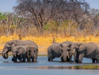 Badderende olifanten