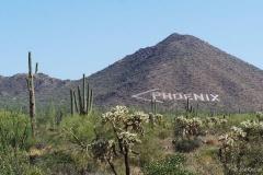 Phoenix SIgn in de bergen
