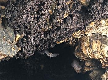 Het plafond van de tempel zit vol met vleermuizen