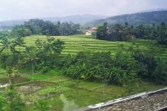 Het groene Javaanse landschap trekt aan ons voorbij