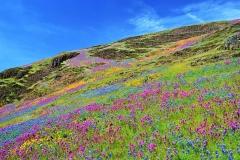 Bloemen op de noordelijke Table Mountain