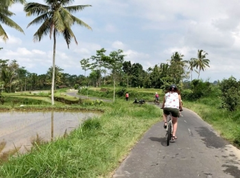 Fietsen door de rijstvelden