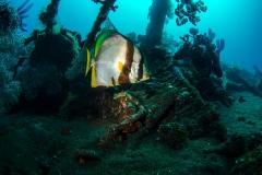 Grote maanvis bij het USS Liberty Wreck
