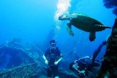 Grote zeeschildpad bij het USS Liberty Wreck
