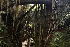 Op een brug in the Monkey Forest