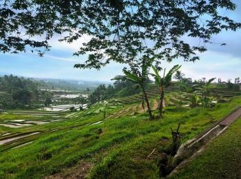 Jatiluwih rijstterrassen