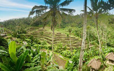 Reisblog: Bali & Java