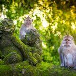 Makaken in the Monkey Forest