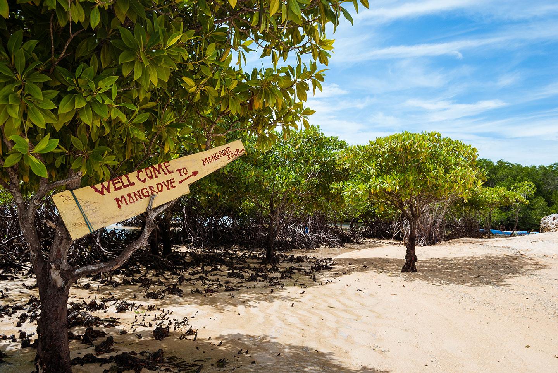 Mangrovebos van Nusa Lembongan