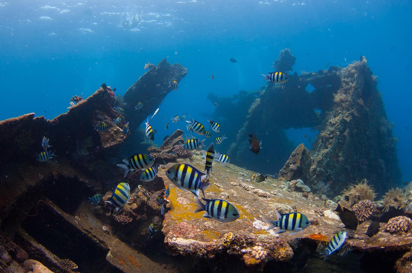 Het USS Liberty Shipwreck trekt veel gekleurde vissen aan