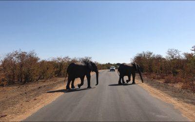 Dag 5 – Safari in het Kruger Park