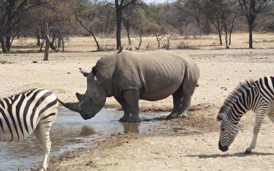 Dag 8 – Van Makgabeng naar Botswana