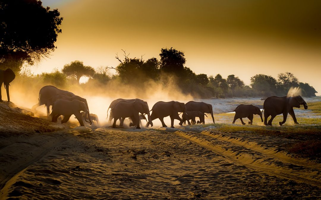 Dag 15 – Safari in Chobe National Park
