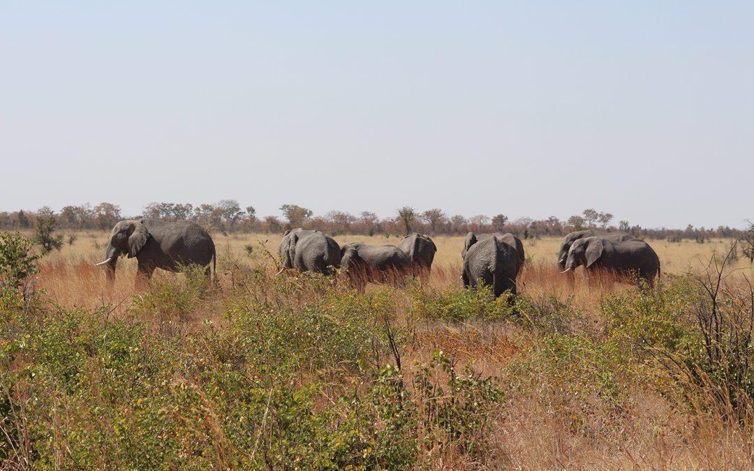 Dag 14 – Van Gweta naar Kasane